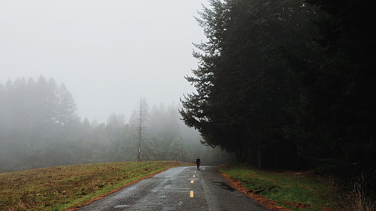 person walking on road pavement near tall pine trees during foggy weather