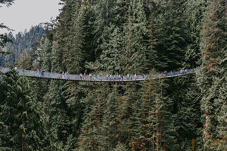 people on hanging bridge in the middle of the forest during daytime