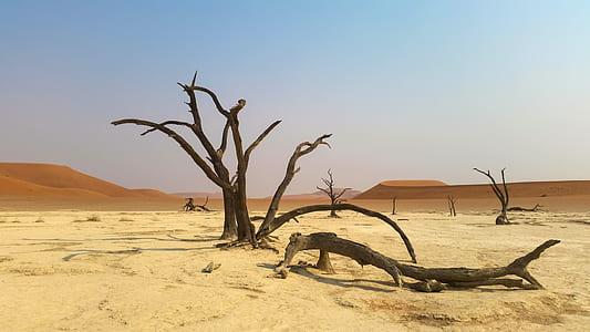 photo of brown bare tree on desert during daytime