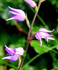 four purple flowers in tilt-shift photography