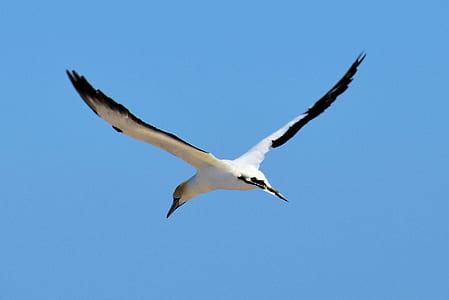 white and black bird flying under blue sky during daytime