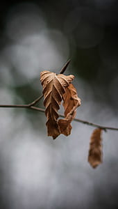 selective focus dry leaf
