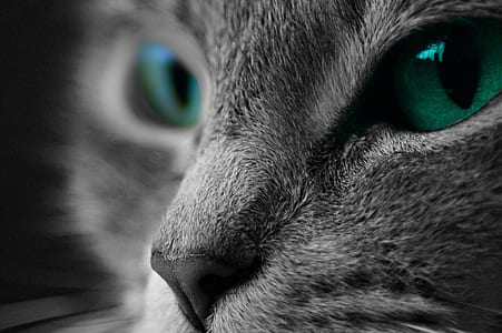 selective color of cat with green eyes