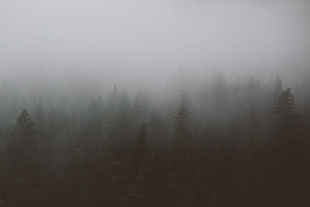 foggy forest during day time