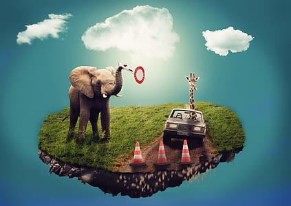 elephant on field with giraffe on sedan
