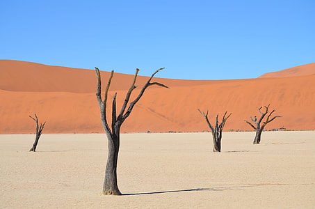 brown tree bark on brown land field