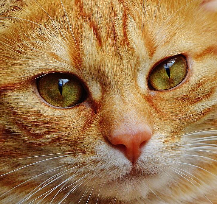 macro photography of orange tabby cat