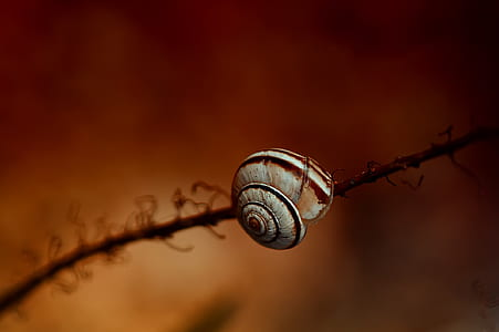 white and brown snail