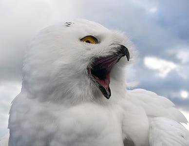 close up photo of snow owl