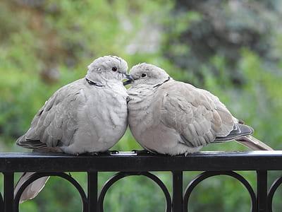 two gray short-beak birds perching on metal rail