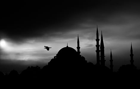 silhouette of bird over dome building