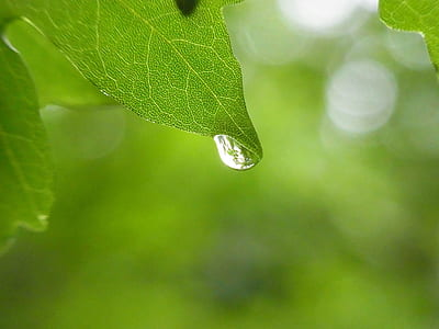 shallow photography of green leafed plant