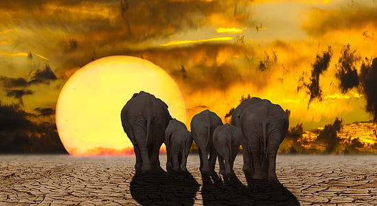 elephant illustration with sun