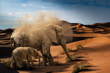 two brown elephants at desert