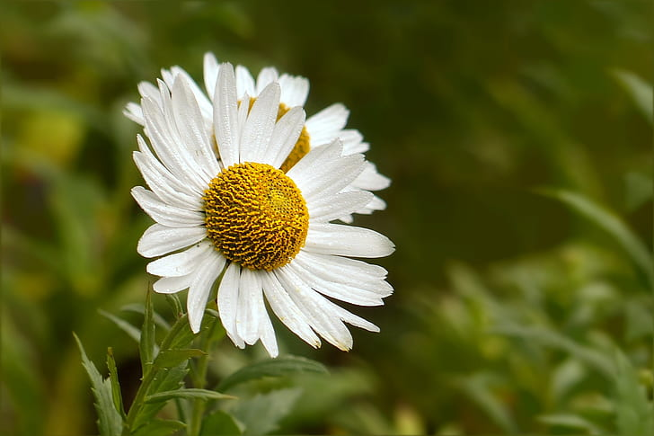 white aster flowers in bloom at daytime