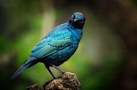 shallow focus of blue bird