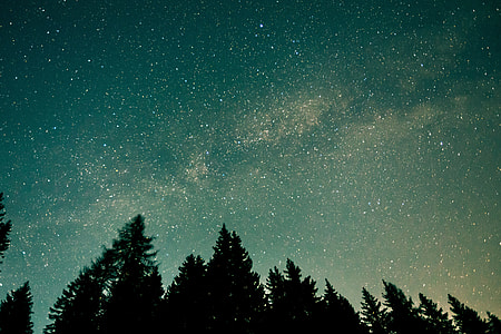 Forest trees and stars in the night sky