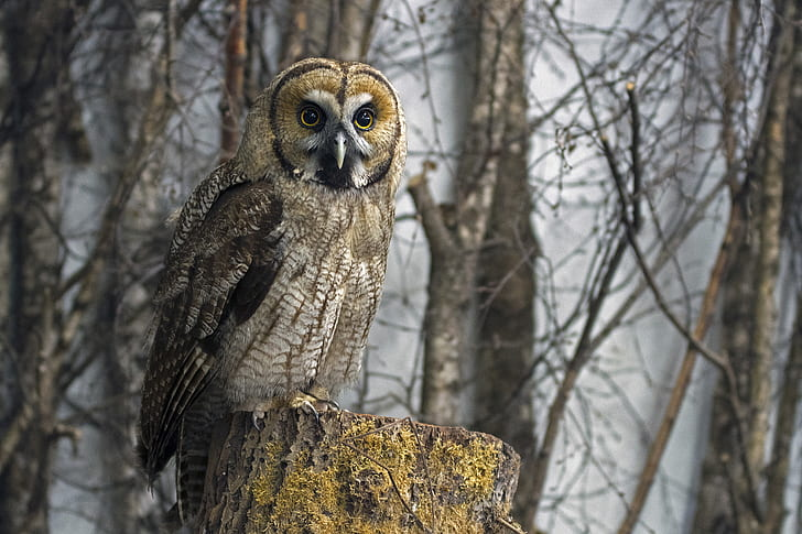 owl perching on tree trunk