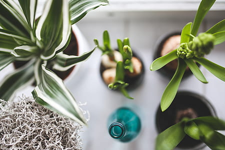 four green leaf plants beside blue glass bottl