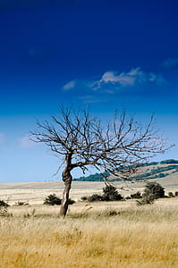 photo of leafless tree on grass field