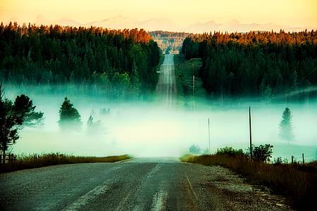 black asphalt road with white fog