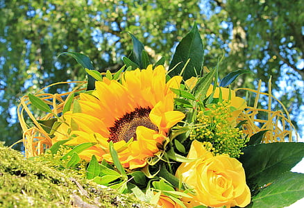 photography of Sunflower and yellow Peony flowers