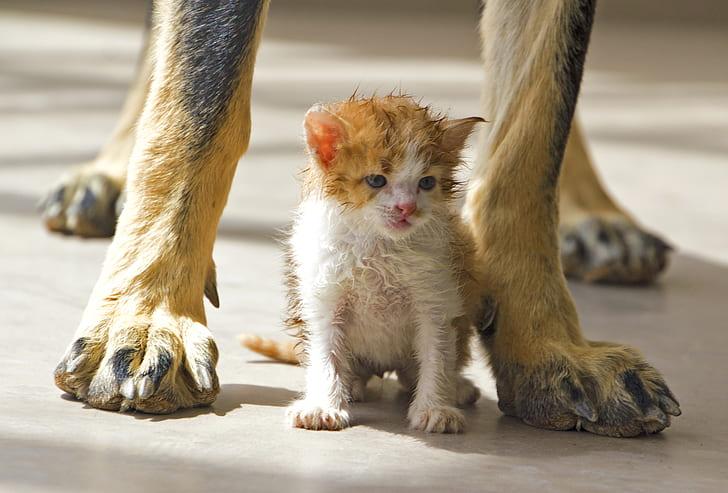 white and orange kitten sits under tall dog at daytime
