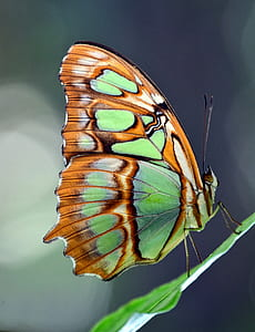 green, brown, and black butterfly on top of green leaf during daytime