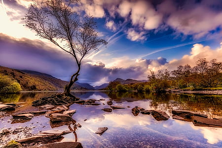 landscape photo of trees near body of water