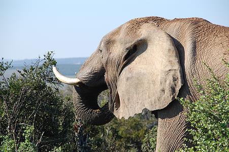 elephant near trees photograph