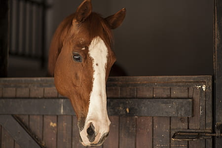 white and brown horse inside wooden stable