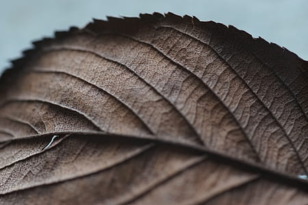 closeup photography of withered leaf