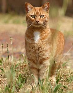 selective focus photo of orange tabby cat