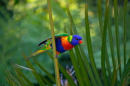selective focus photography of rainbow lorikeet