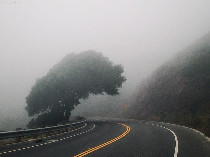 Black Asphalt Road Near Mountain and Green Leafed Tree ]