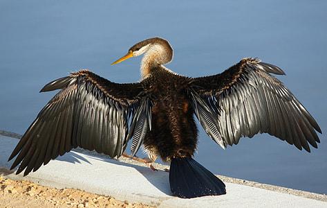 black and white bird beside body of water