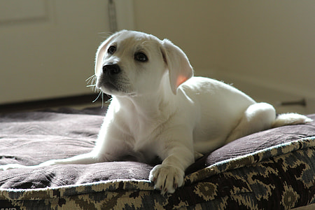 puppy sitting on bed cushion