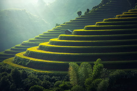 brown tree on rice terraces