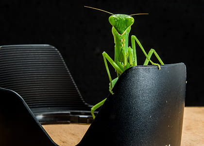 Green Grasshopper on Black Metal