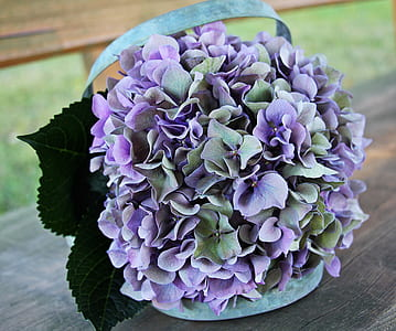 purple-and-green Hydrangea flowers bouquet close up photo