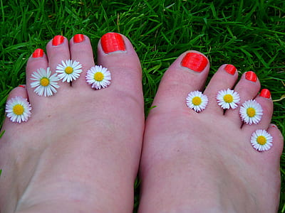 eight white chamomile flowers in between human toes with red pedicure