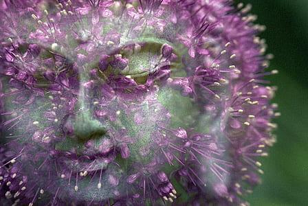edited photo of dandelion showing face of Gautama Buddha