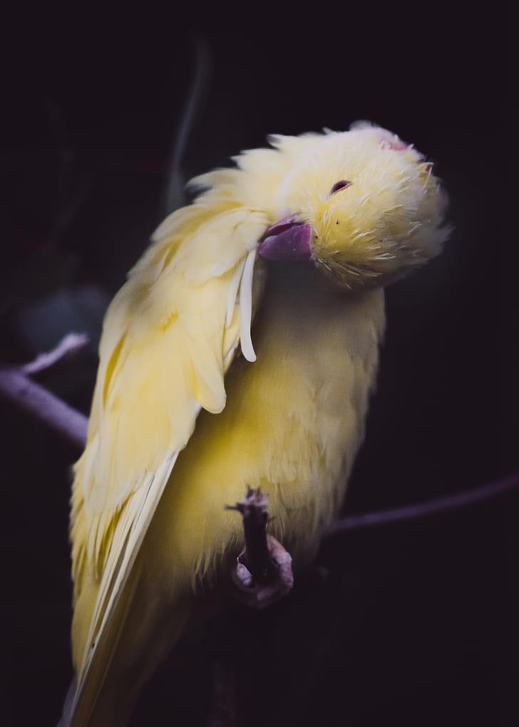 closeup photo of yellow bird on tree branch