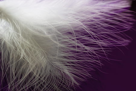 shallow photography of feather