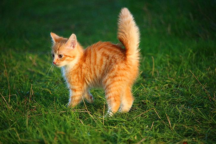 orange tabby kitten on top of green grass