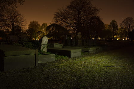 graveyard, graves, tree, spooky, night, tombstones