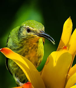 green and black bird on yellow flower