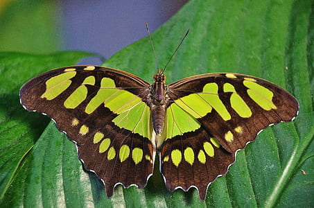green and brown butterfly