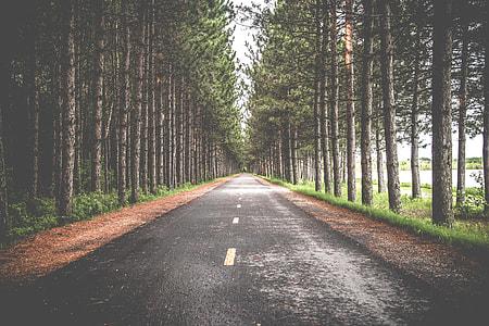 asphalt road in between tress