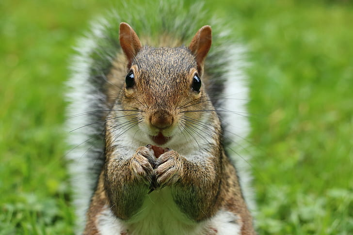 closeup photography of squirrel